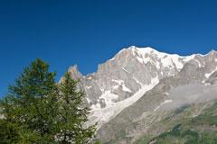 Mont Blanc - deep blue sky background - green fir trees foreground